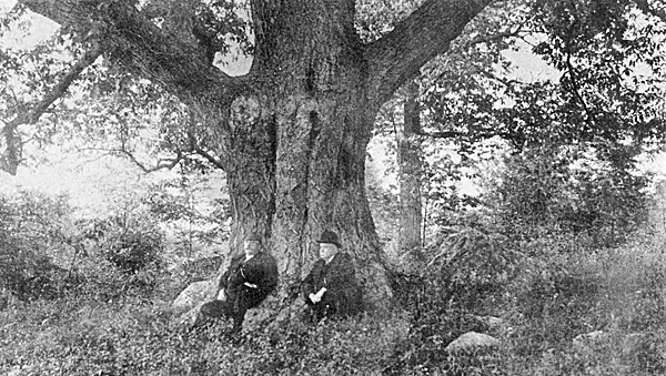 MR. HOYT AND THE WRITER UNDER THE GIANT OAK