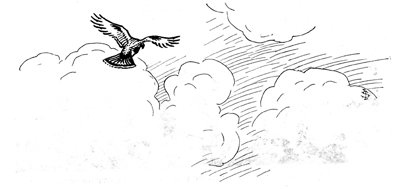 drawing from article, hawk flying below clouds
