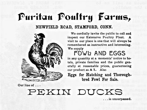 Puritan Poultry Farm, undated ad